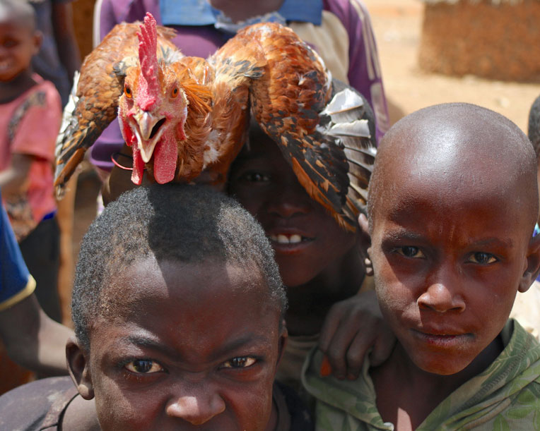 The simple gift of an animal can give children the options of education and valuable skills.