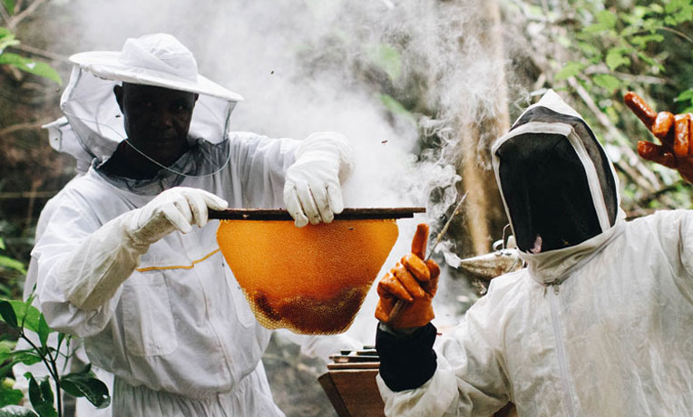 The Samaritan's Purse RECAL programme helps Liberians create livelihoods through beekeeping.