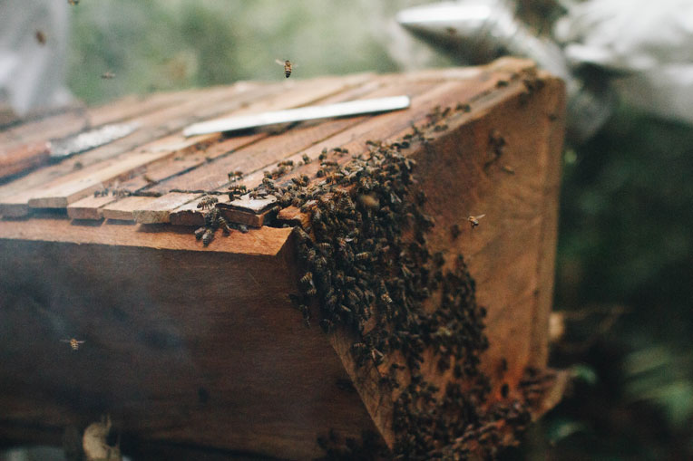 Our RECAL programme provides training and materials for building and maintaining lucrative beehives.