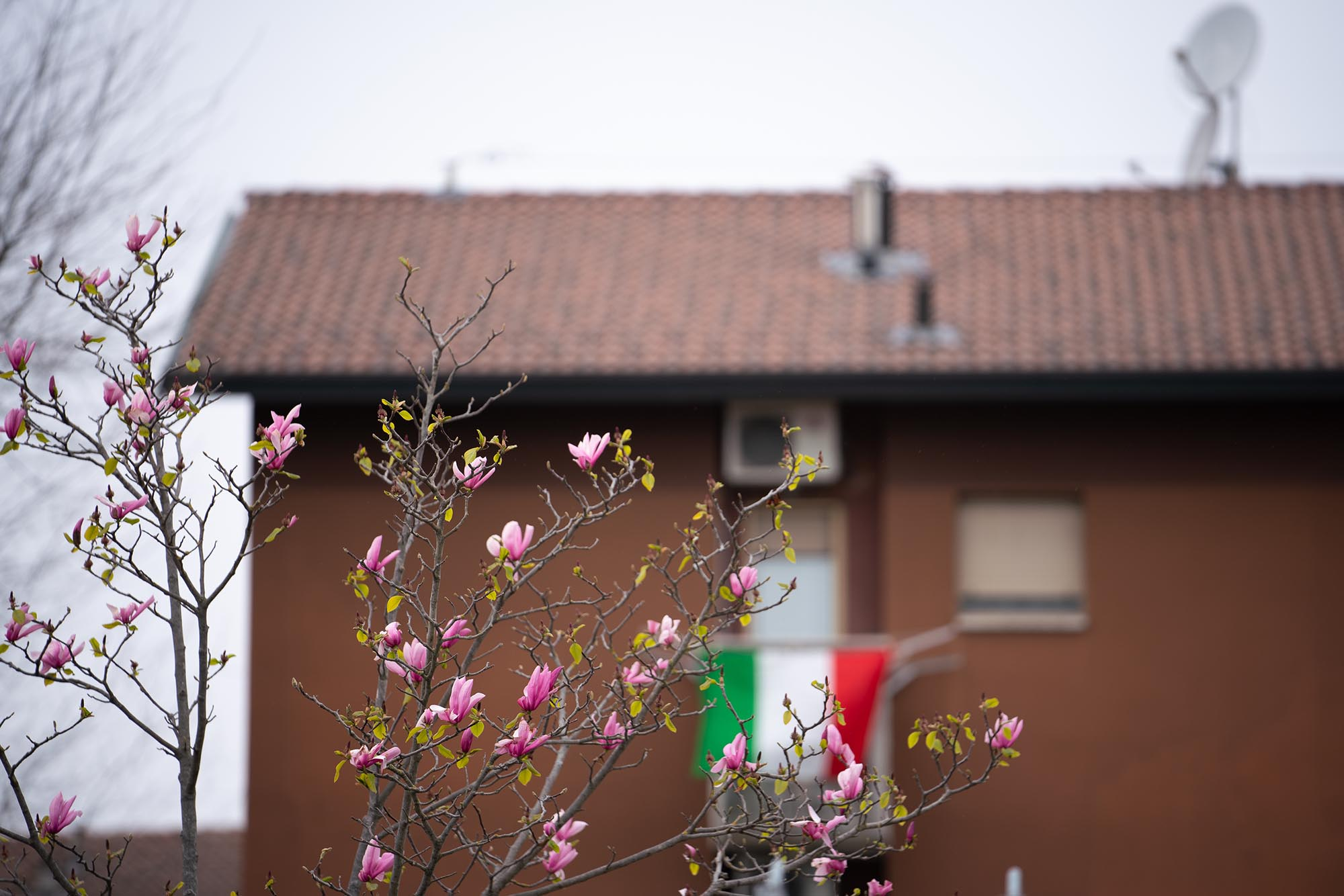 Spring blossoms invoke a sense of hope near the SP field hospital for COVID-19 patients in Cremona, Italy..